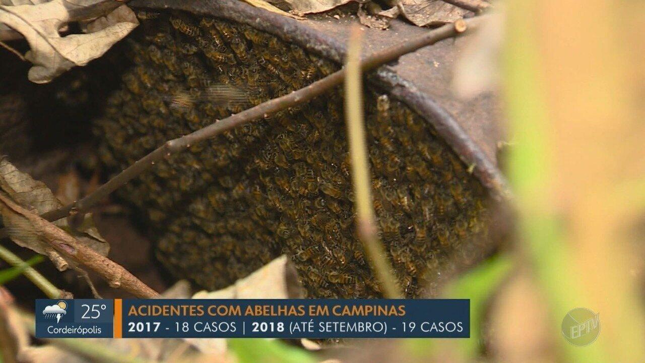 Número de acidentes com abelhas é maior que todo ano passado em Campinas