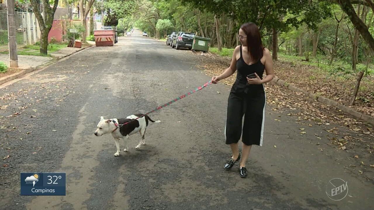 Campanha de conscientização ao câncer de mama alerta para doença em animais de estimação