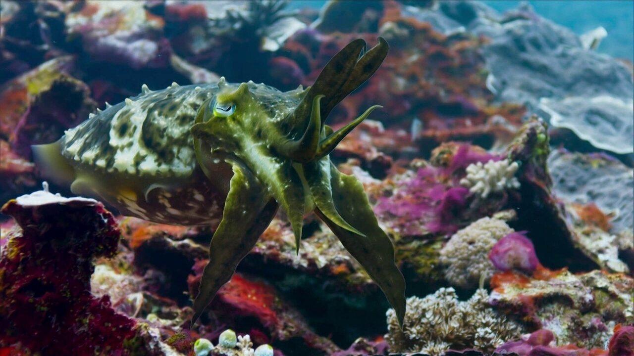 Planeta Azul: conheça o bobbit, minhoca carnívora que vive nas profundezas do oceano
