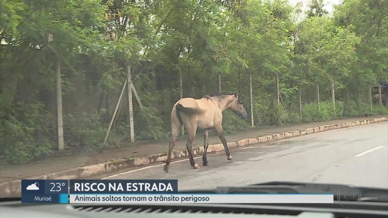 Cavalos soltos podem ser perigosos para motoristas