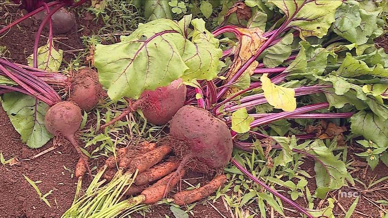 Cultivo orgânico gera renda, preserva o meio ambiente e melhora vidas na Serra de SC
