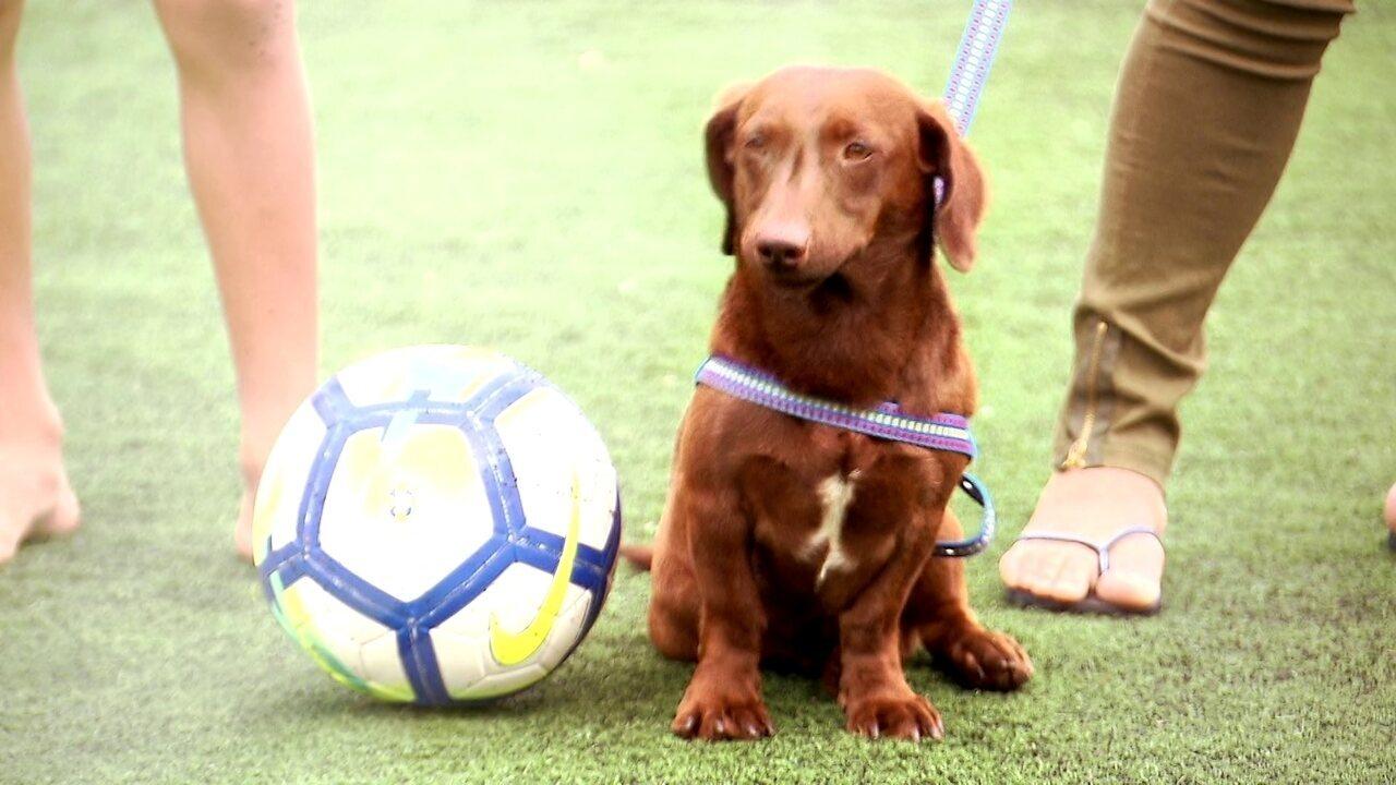 Conheça a história de Salsicha, o cachorro goleiro que bombou na internet