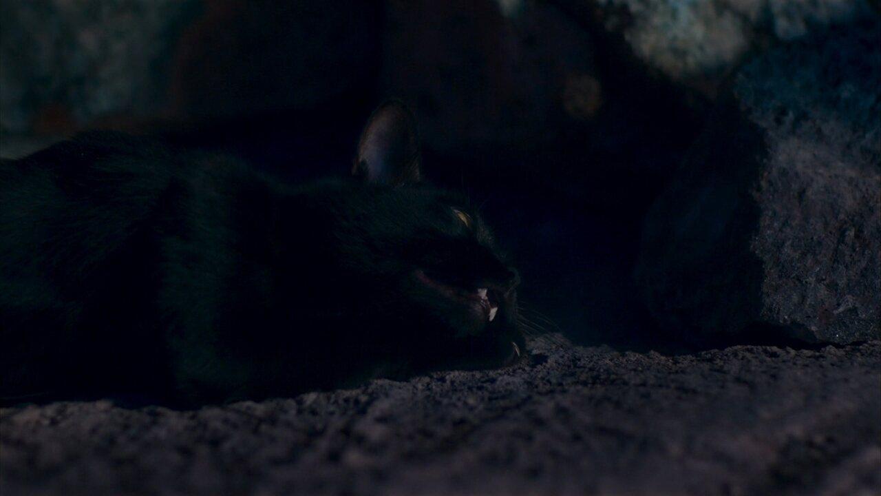 León acorda após queda