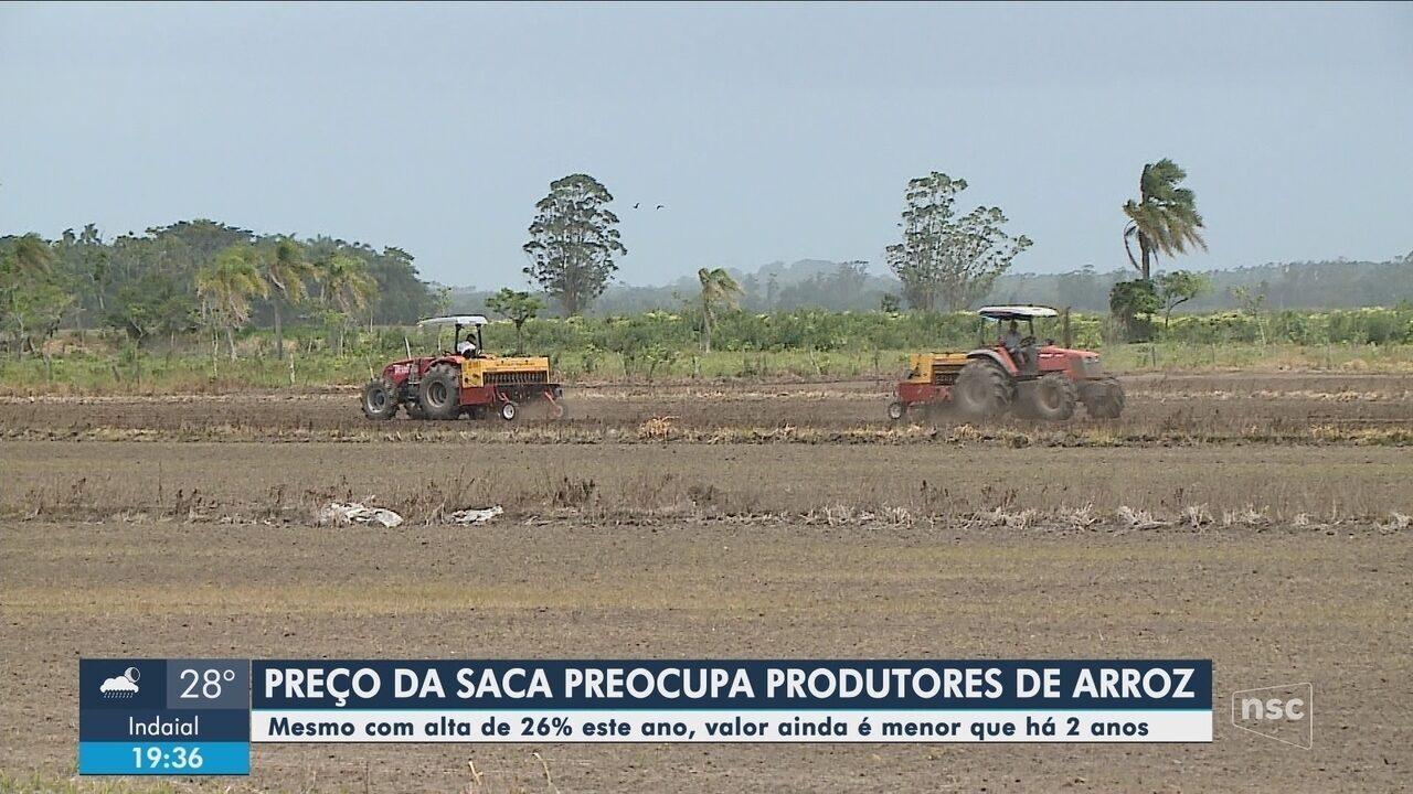 Preço da saca de arroz preocupa produtores em Santa Catarina