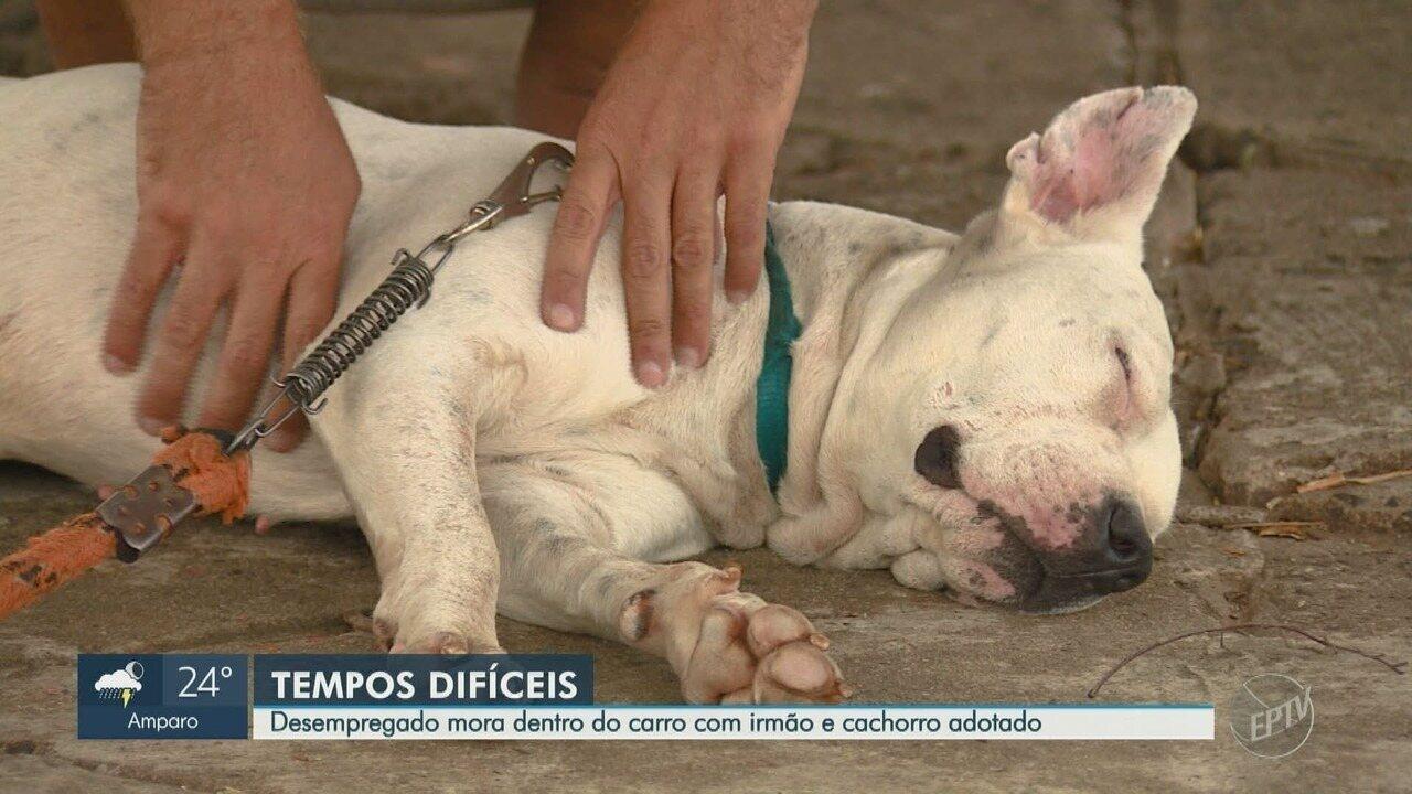Vendedor mora dentro do próprio carro com cachorro de estimação em Campinas