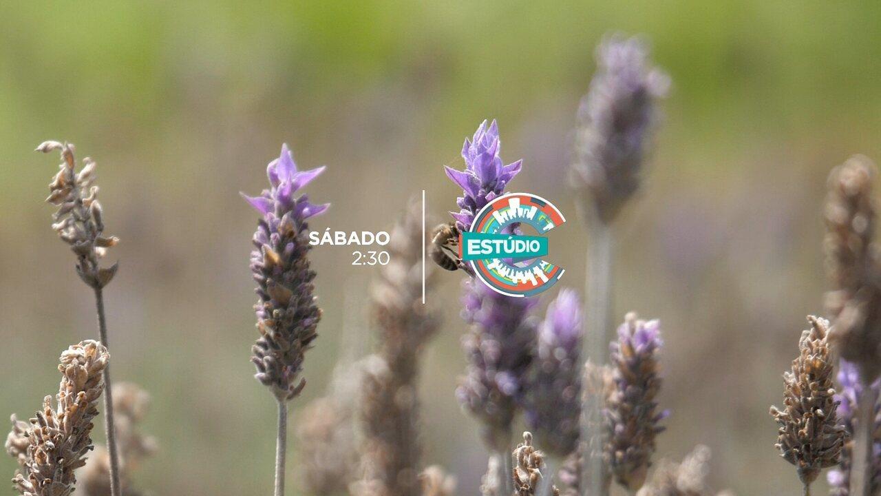Paraná florido: conheça as flores do nosso estado neste sábado