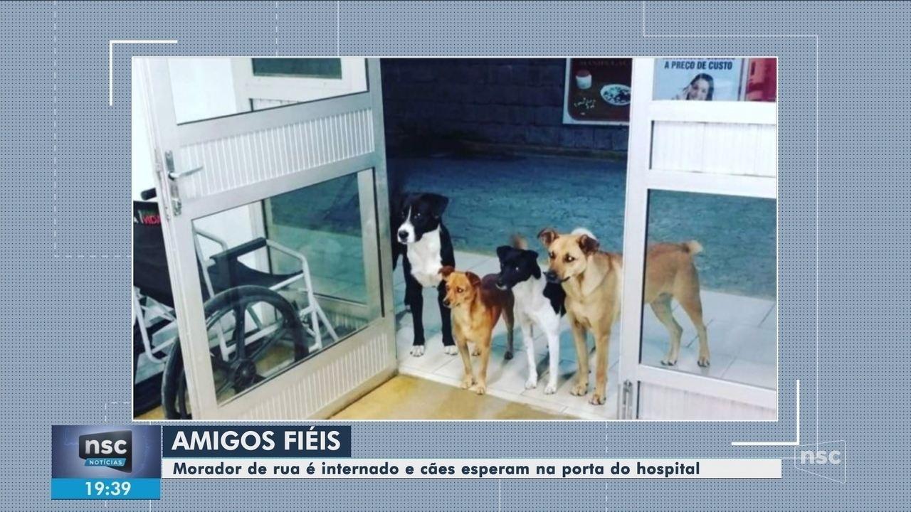 Cães aguardam na porta de hospital após dono dar entrada na unidade em SC
