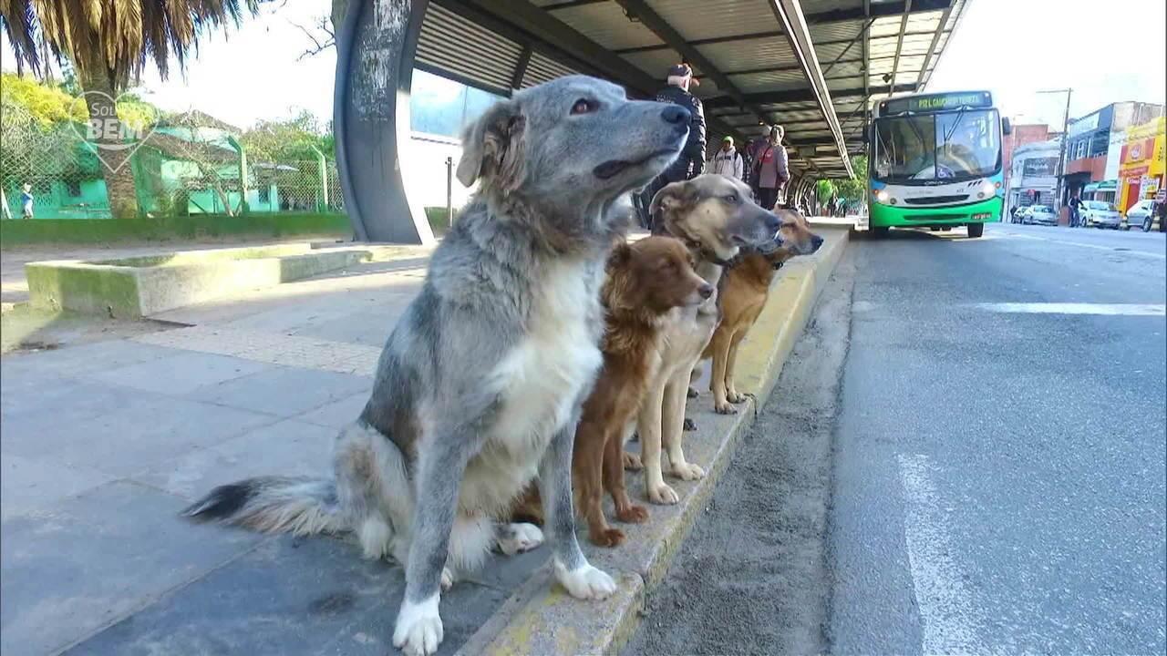 Adestrador de cães no Rio Grande do Sul dedica parte do dia treinando vira-latas