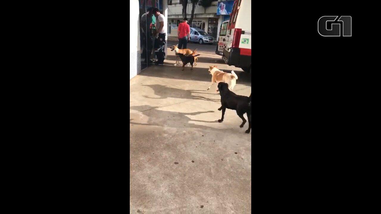 Morador de rua é internado, e cães aguardam por ele na entrada de hospital em Cianortte