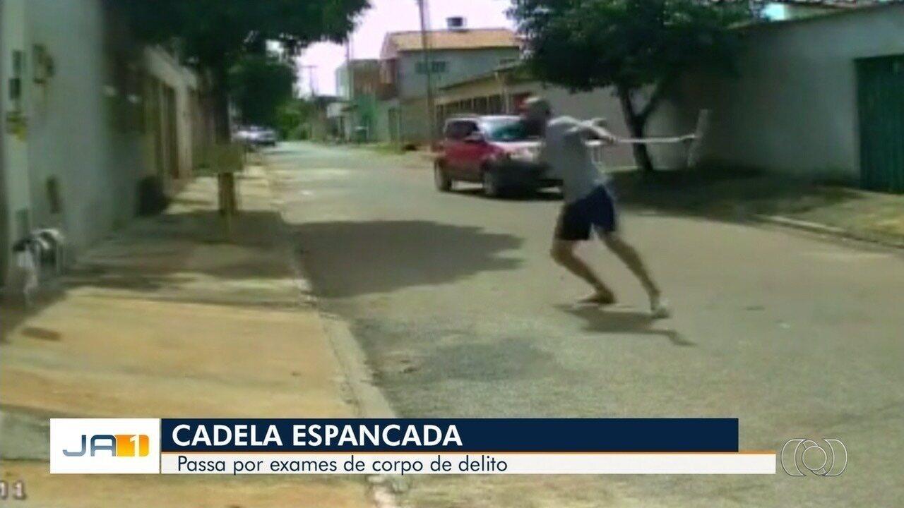 Cadela filmada sendo agredida com rodo passa por exame de corpo de delito em Goiânia
