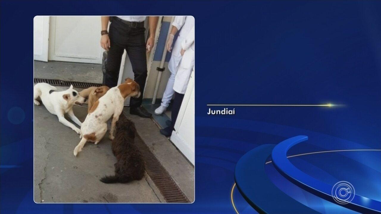 Cães de morador de rua 'fazem plantão' na porta de hospital à espera do dono