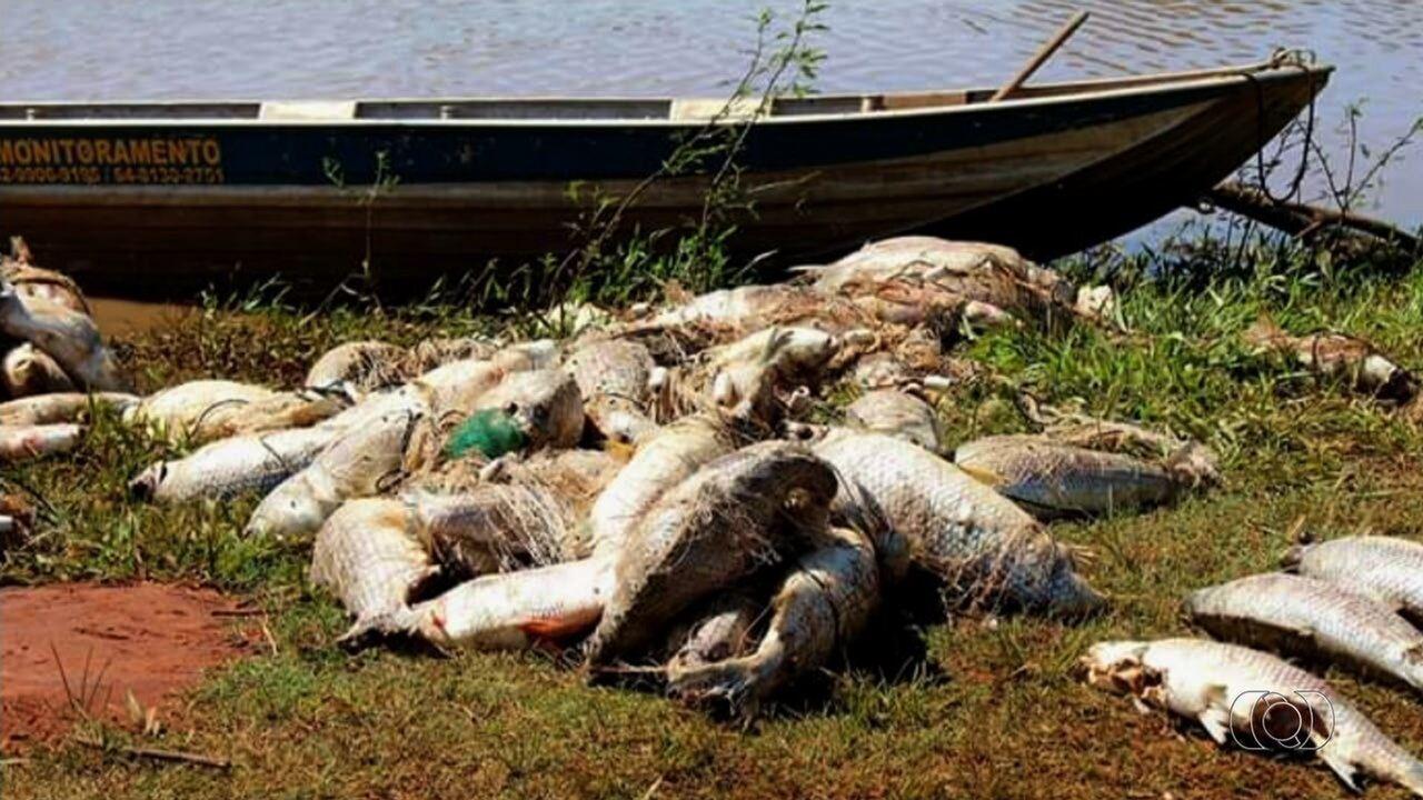 Mais de 1 tonelada de peixes é encontrada morta em rio de Caçu