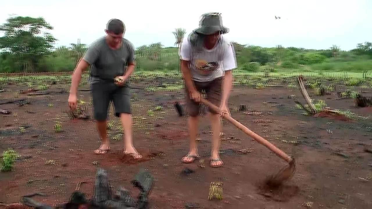 Chuvas empolgam agricultores em Esperantina