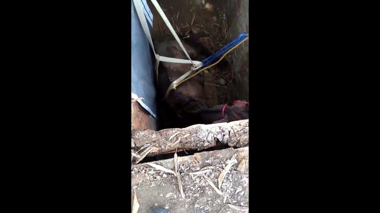 Bombeiros resgatam cavalo que caiu em fossa em Maceió