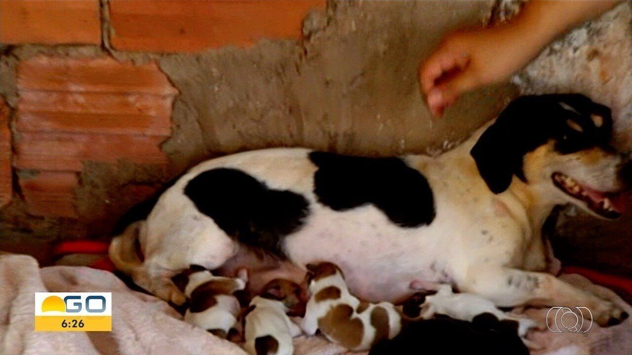 Cadela adota 5 filhotes que foram abandonados em rua de Itumbiara