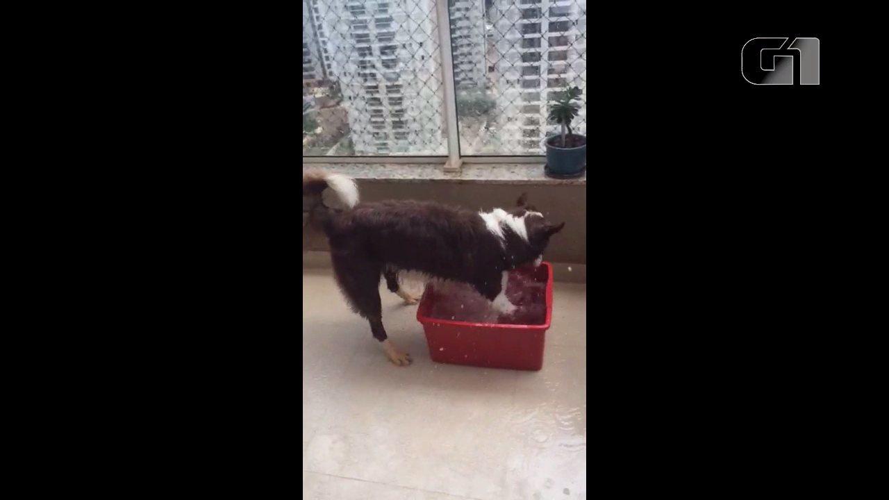 Olívia se refresca com uma bacia na sacada do apartamento, em Londrina