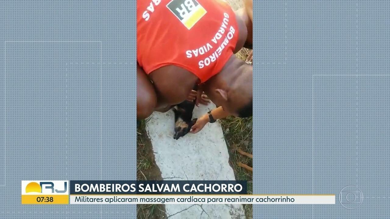 Bombeiros ressuscitam cachorro que ficou pendurado pela coleira em Itaipu