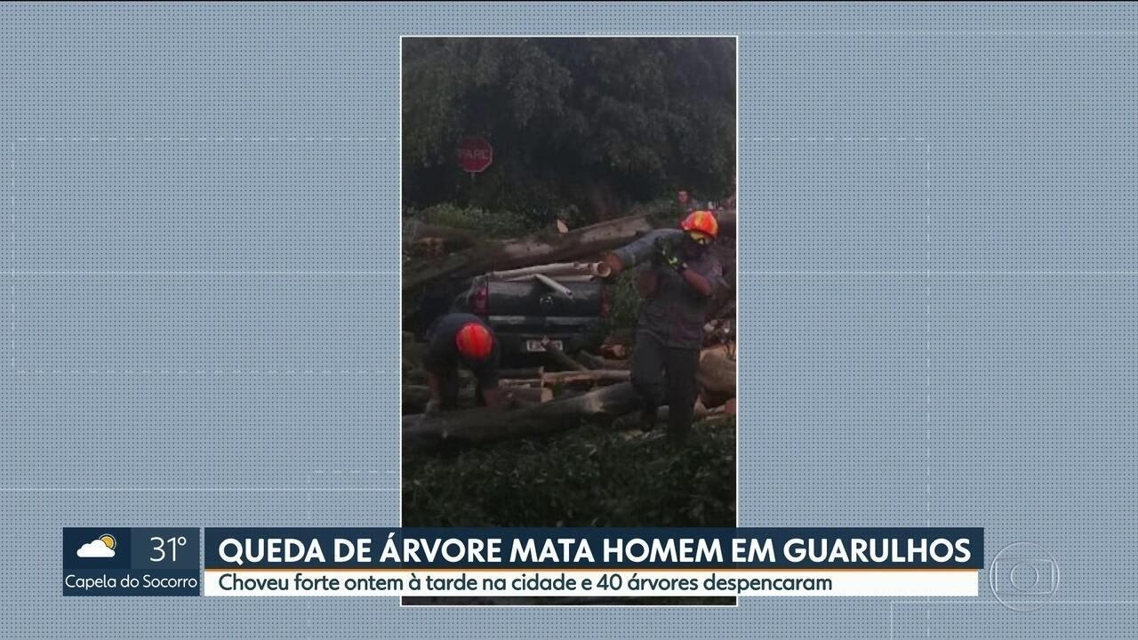 Queda de árvore mata homem de 45 anos em Guarulhos
