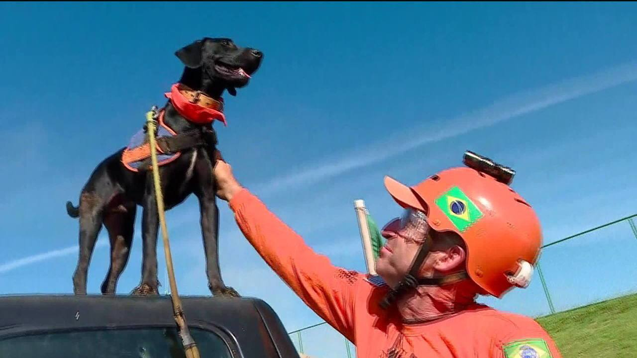 Cachorrinho 'Resgate' ajuda bombeiros no resgate das vítimas em Brumadinho