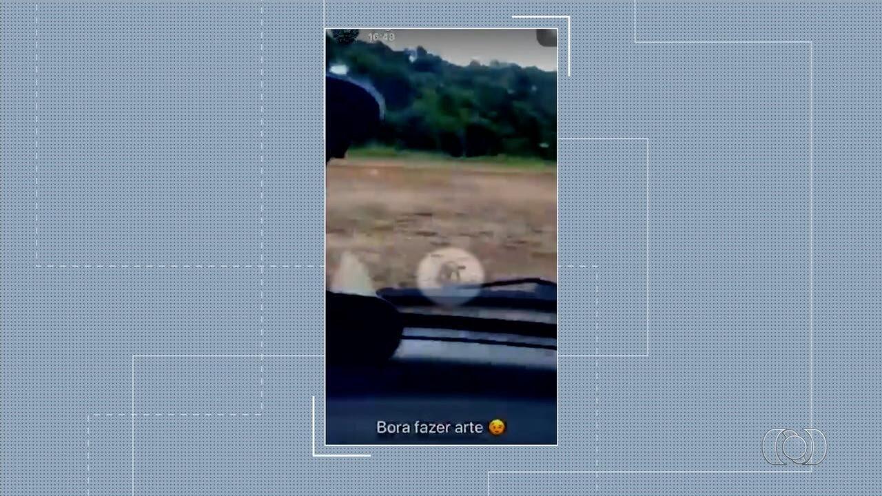 Vídeo mostra motorista perseguindo de carro quatis em lavoura de Palminópolis