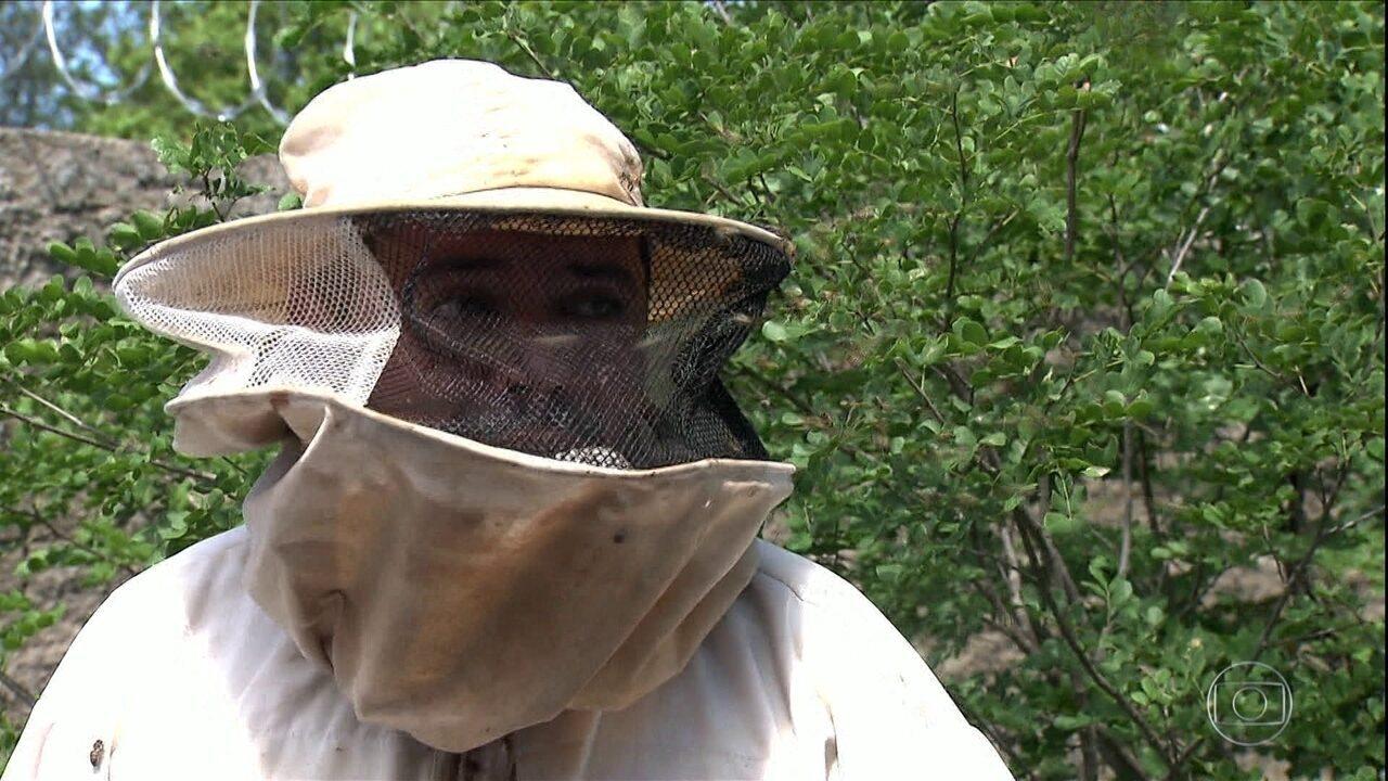 Conheça o primeiro e único curso profissionalizante de apicultura do país
