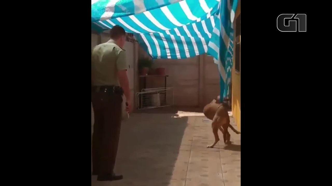 Policial pula portão para salvar cão enroscado em toldo
