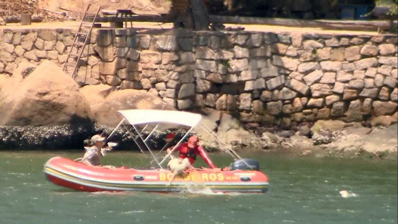 Vídeo mostra momento em que um dos cães é resgatado na Baía de Vitória