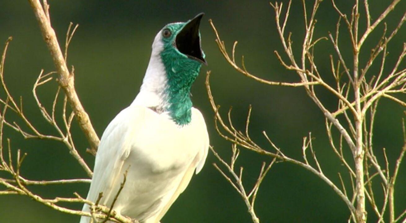 Aves se destacam pelos sons característicos de cada espécie