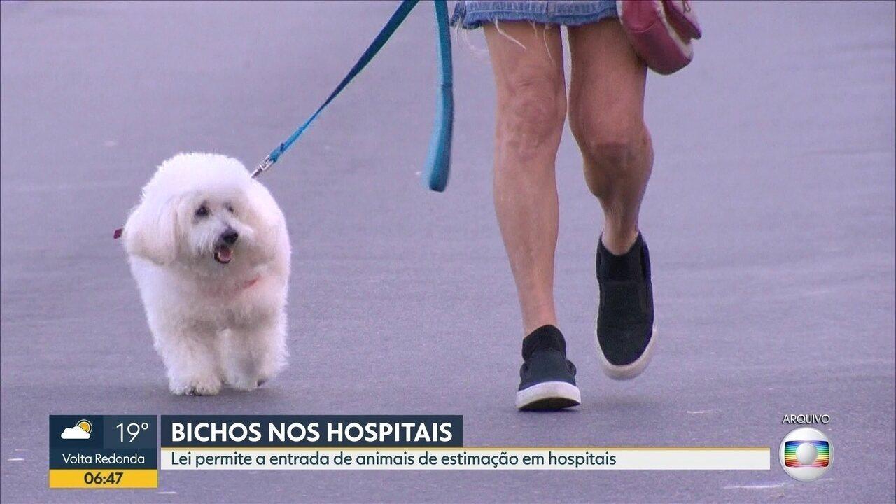 Lei permite a entrada de animais de estimação em hospitais