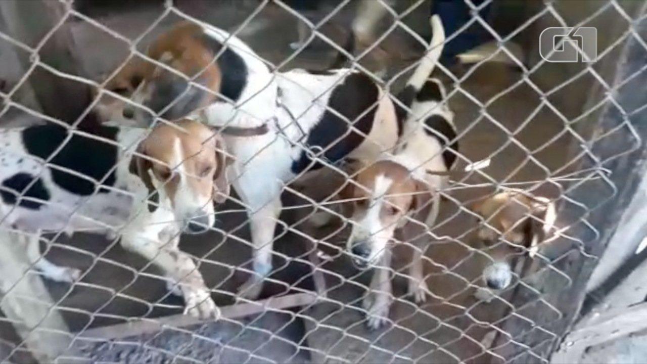 Cães são apreendidos pela Polícia Ambiental em Jambeiro
