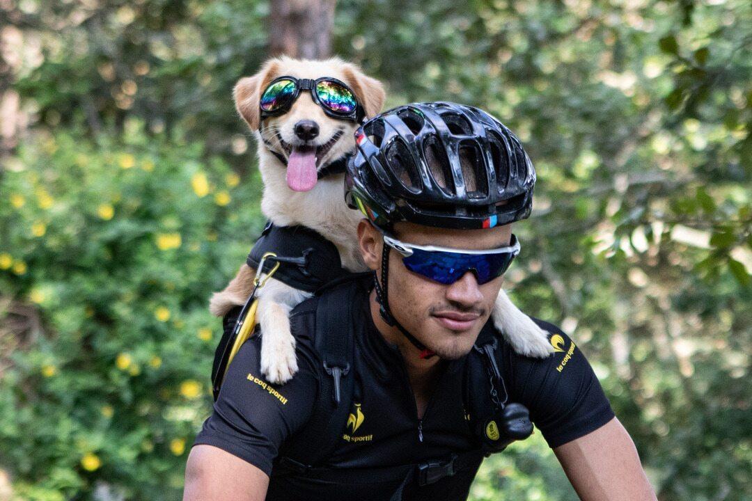 Ciclista adota cachorrinha Yellow e adapta mochila para passear com ela