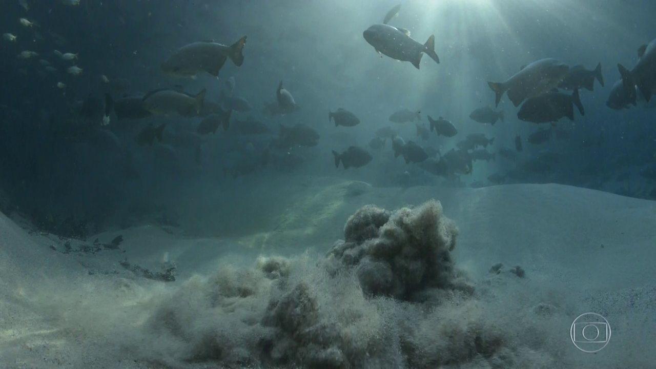 Águas cristalinas de Bonito ficam cheias de lama e paraíso corre risco
