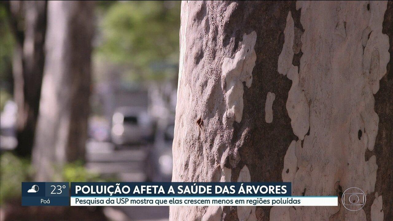 Poluição afeta a saúde das árvores