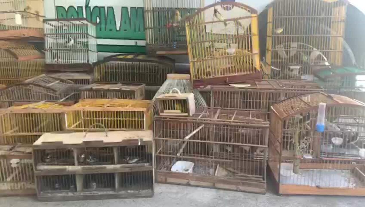 Batalhão de Polícia Ambiental apreende 208 aves silvestre em Maceió e no interior