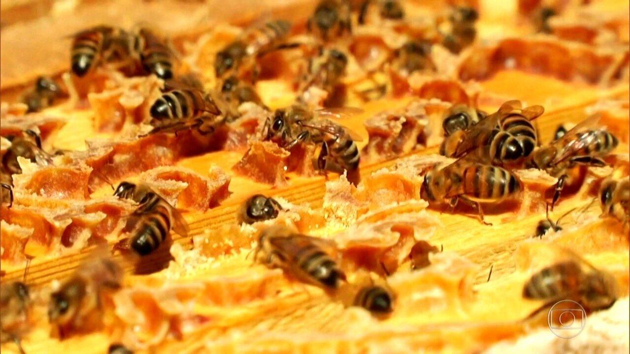 Uso de agrotóxicos em lavouras ameaça abelhas