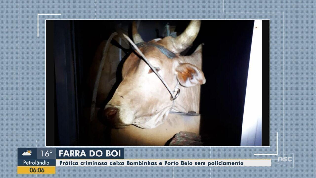 Cidades catarinenses ficam sem policiamento por prática ilegal da farra do boi