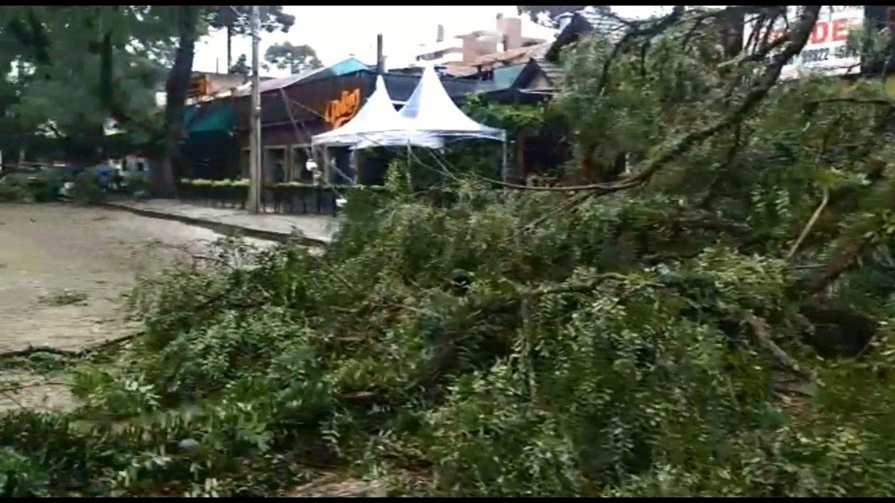 Temporal derruba árvores na Praça Espanha, em Curitiba