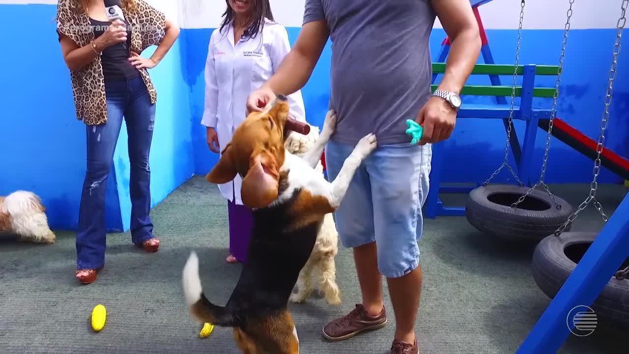 Mercado pet cresce graças a mudanças no comportamento dos donos de animais de estimação