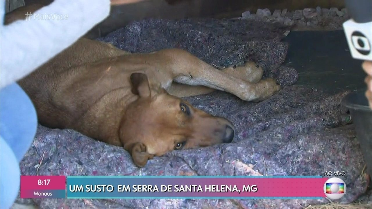Cachorro se acidenta após morder a mochila de piloto de parapente