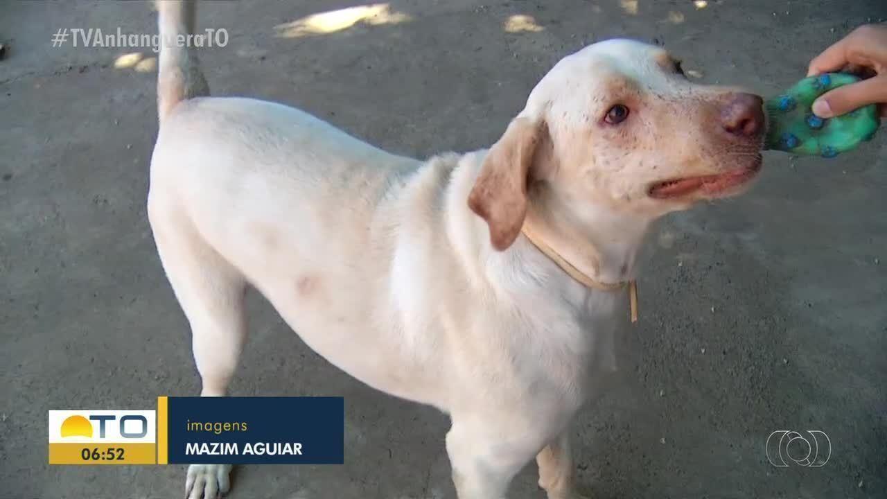 Lei municipal: dono perderá guarda de animal caso comprovados maus-tratos e crueldade