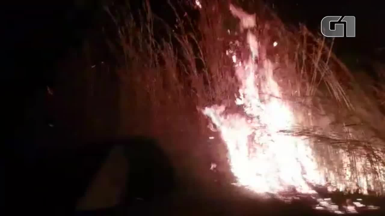 Vídeo mostra matagal sendo tomado por queimada às margens da TO-010