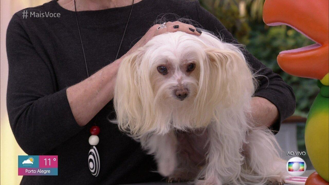 Ana Maria Braga conta que a cachorrinha Cristal está cega