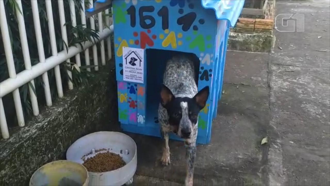 Projeto utiliza materiais recicláveis e doações para construir casinhas de cachorro