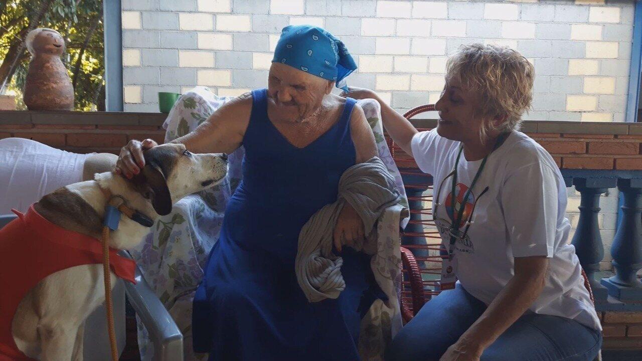 Cães são regastados das ruas e reabilitados para se tornarem terapeutas em Ribeirão Preto