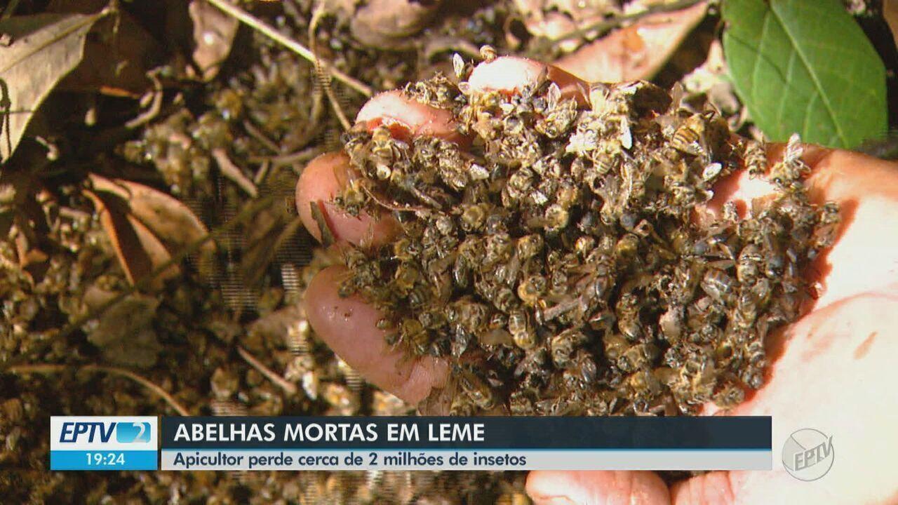 Apicultor perde mais de 2 milhões de abelhas em Leme