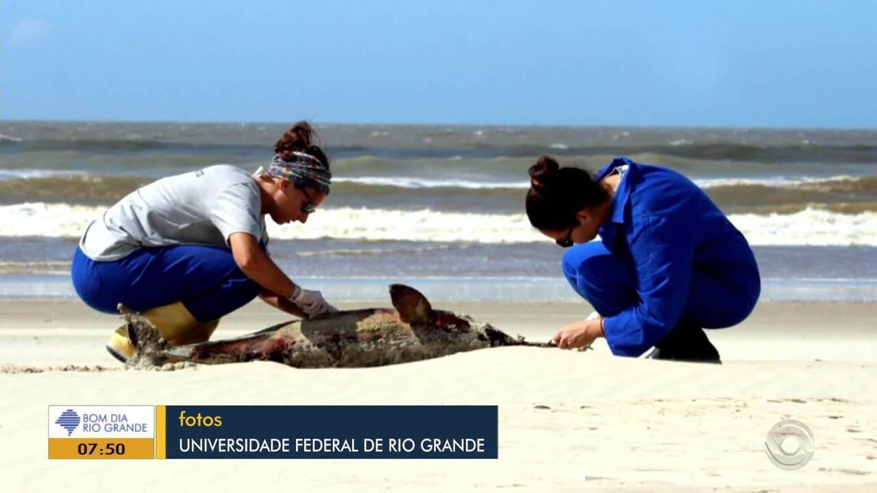 114 toninhas são encontradas mortas no litoral gaúcho em 2019
