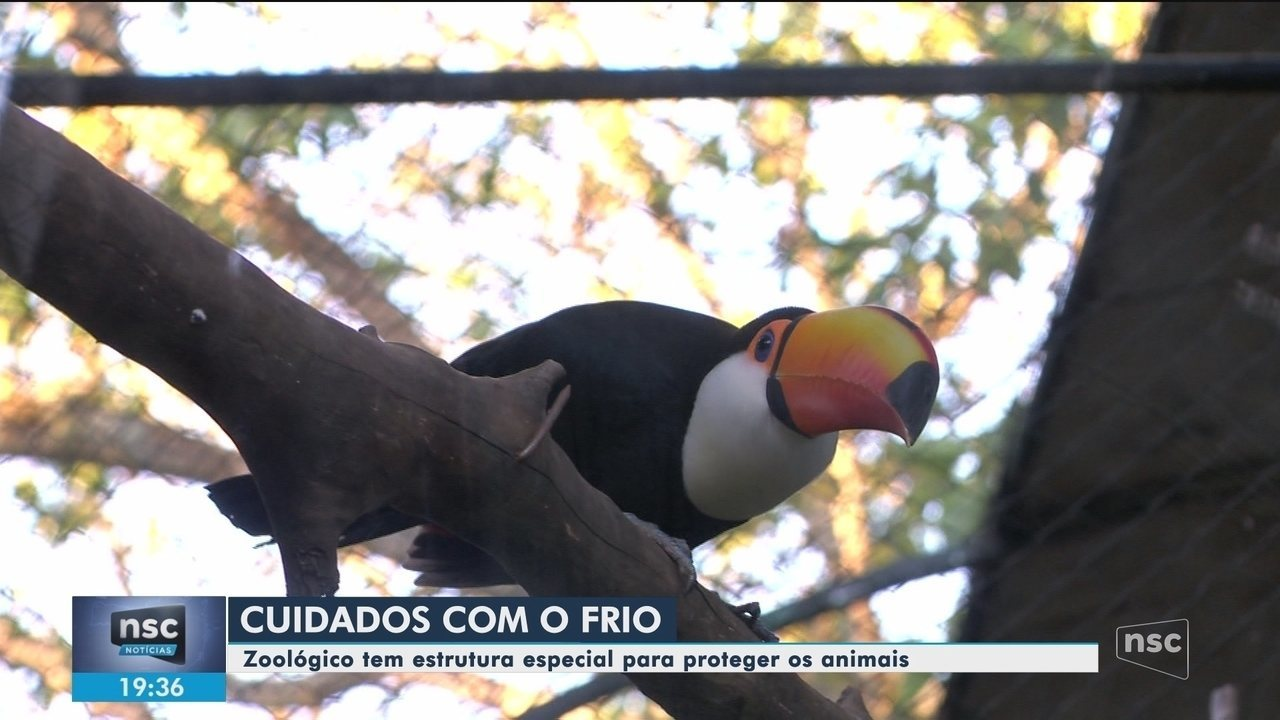 Zoológico de Pomerode tem estrutura especial para proteger os animais durante o inverno