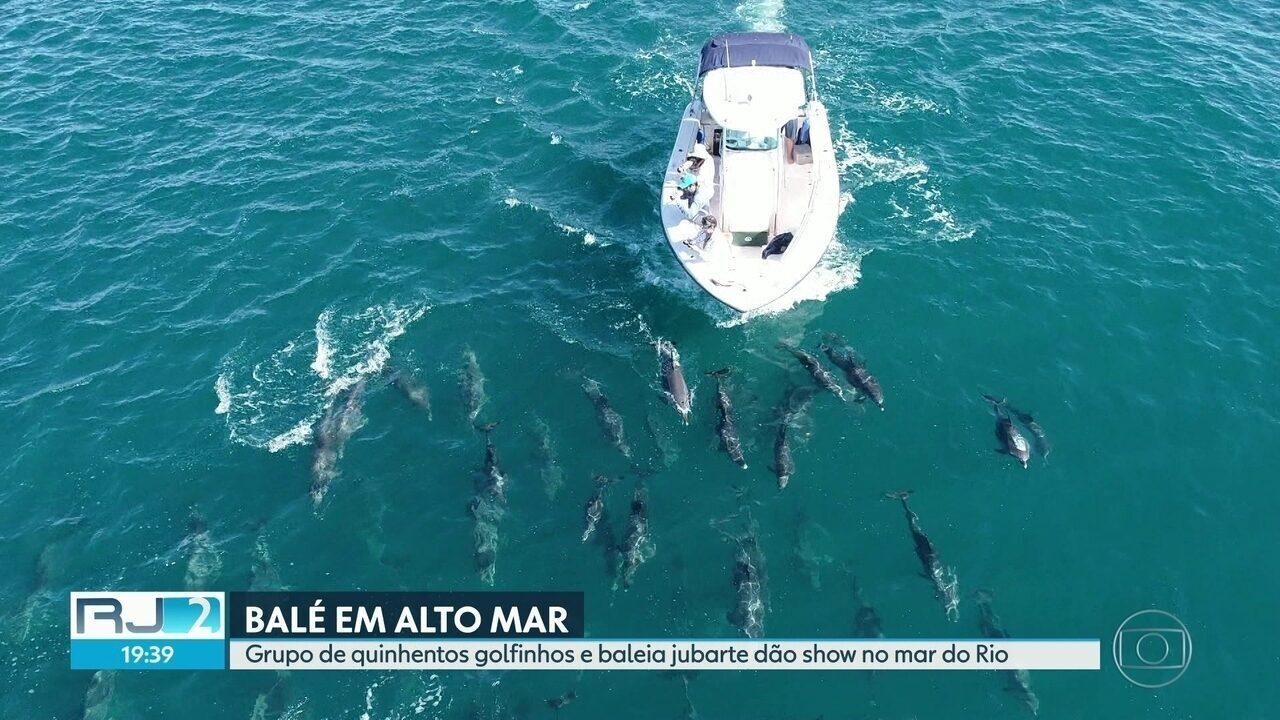 Golfinhos e baleia jubarte dão show no mar do Rio