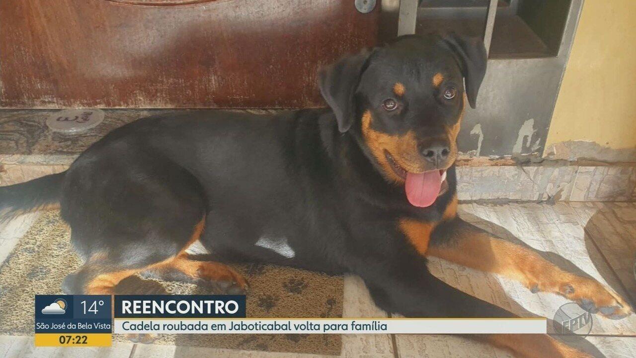 Cadela levada em carro roubado é encontrada na zona rural de Monte Alto, SP