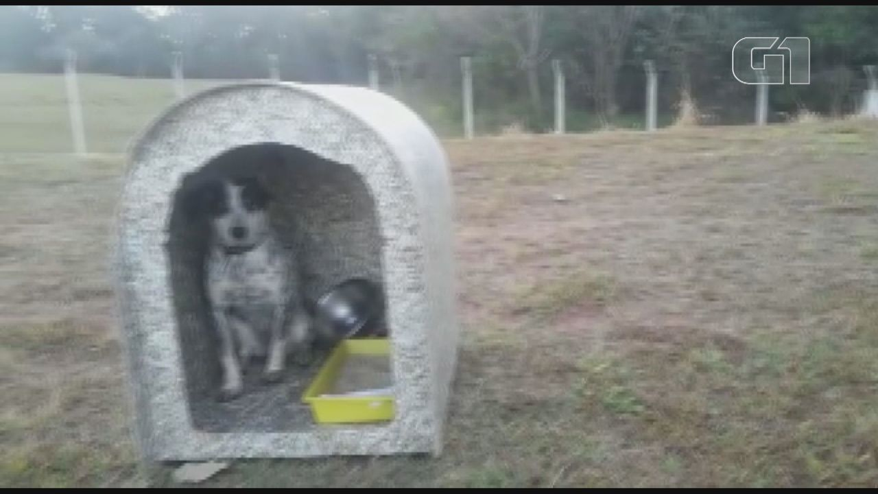 Cachorra é abandonada às margens de trevo da Rodovia Brigadeiro Faria Lima em Matão